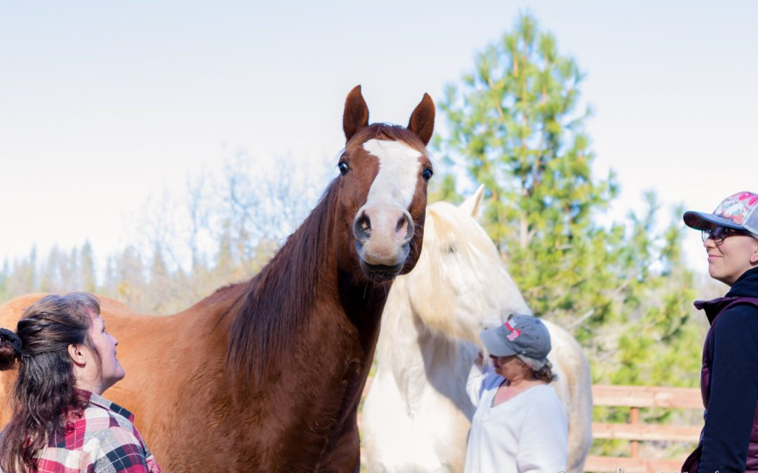 In a round pen with a horse, women discover how to be free.